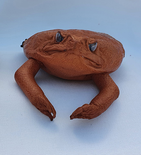 Cane Toad Coin Purse - Made in Australia